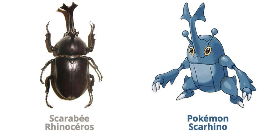 Scarhino, le scarabée rhinocéros japonais